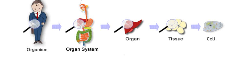 Cells & metabolism