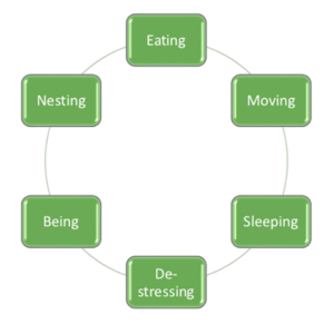 six elements of holistic wellbeing